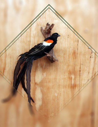 estelle-nel-bird-taxidermy-10