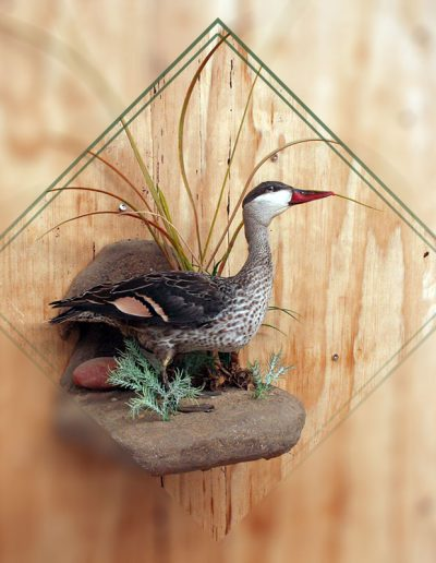estelle-nel-bird-taxidermy-11