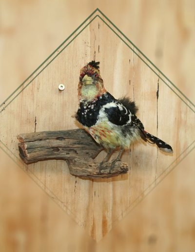 estelle-nel-bird-taxidermy-12