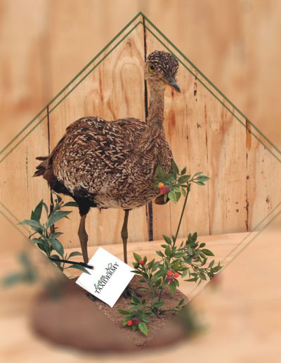 estelle-nel-bird-taxidermy-3