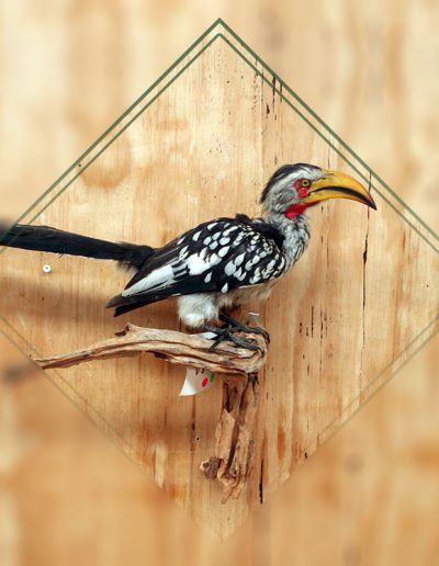 estelle-nel-bird-taxidermy-5