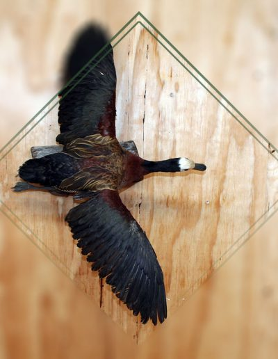 estelle-nel-bird-taxidermy-7