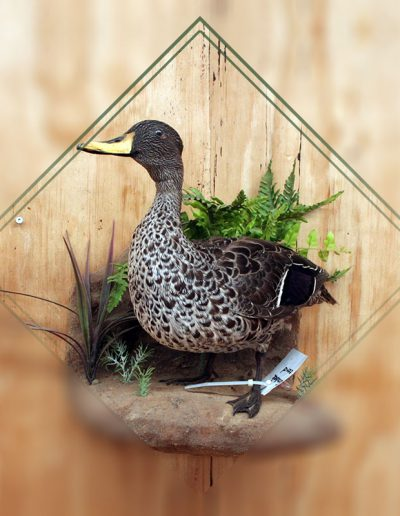 estelle-nel-bird-taxidermy-8