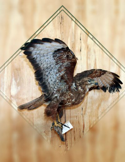 estelle-nel-bird-taxidermy-9