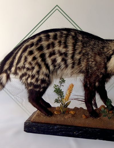 estelle-nel-full-mount-taxidermy-11