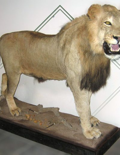 estelle-nel-full-mount-taxidermy-6