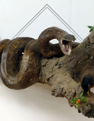 estelle-nel-full-mount-taxidermy-9