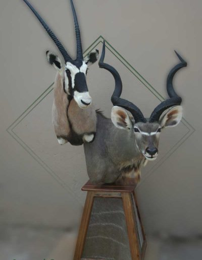 estelle-nel-pedestal-mount-taxidermy-10