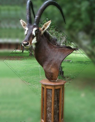 estelle-nel-pedestal-mount-taxidermy-12