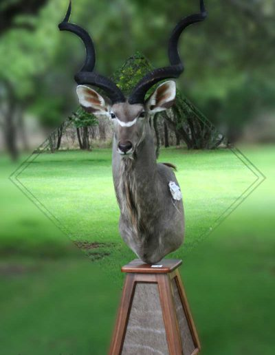 estelle-nel-pedestal-mount-taxidermy-3