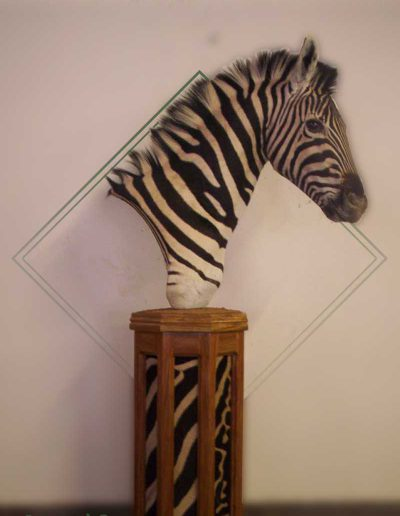 estelle-nel-pedestal-mount-taxidermy-5