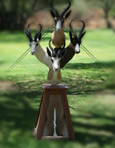 estelle-nel-pedestal-mount-taxidermy-6
